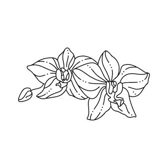 트렌디한 미니멀 라이너 스타일의 난초 꽃. 티셔츠, 웹 디자인, 미용실, 포스터에 인쇄하기 위한 벡터 꽃 그림, 로고 및 패턴 만들기