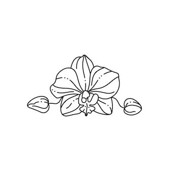 트렌디한 미니멀 라이너 스타일의 난초 꽃. t-셔츠, 웹 디자인, 문신, 포스터에 인쇄하기 위한 벡터 꽃 그림, 로고 및 기타 만들기
