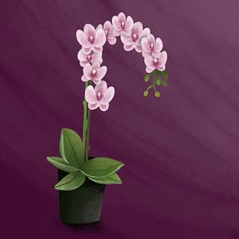Orchid flowers realistic colorful illustration