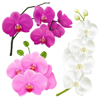Orchid flowers realistic colorful set