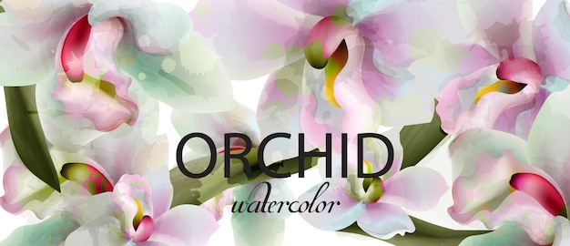 Orchid flowers watercolor background