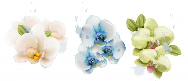 Orchid flowers watercolor