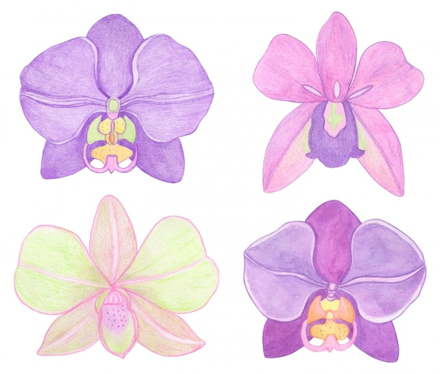 Orchid phalaenopsis watercolor set illustration. beautifull exotic flower in a full bloom