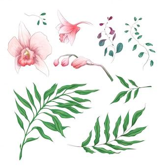 蘭の熱帯の花花の要素