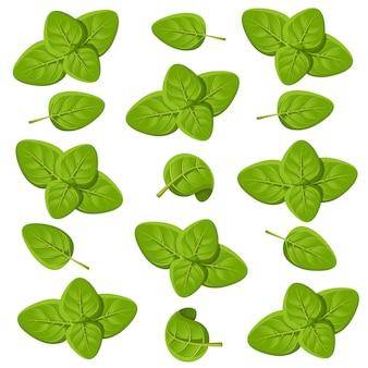 Рисунок набора орегано. орегано с листьями. травяной гравированный стиль иллюстрации. подробный эскиз органического продукта. страница веб-сайта и мобильное приложение по приготовлению острых ингредиентов