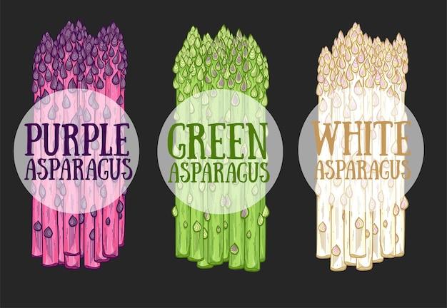 Органическая спаржа фермы еда рисованной. белые, зеленые и фиолетовые ростки спаржи на черном фоне. концепция свежего и здорового вегетарианского питания. натуральный сезонный пищевой ингредиент