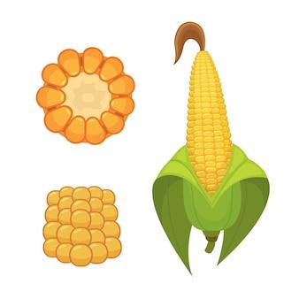 白い背景で隔離の有機トウモロコシ。ポップコーン用の農業農場野菜。葉菜食主義者の食べ物のイラストとトウモロコシの穂軸