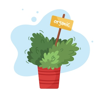 Organic culinary garden on a kitchen windowsill. potted herbs in orange flowerpot.   domestic plant in clay jar with seeds marker label.  illustration  on white.