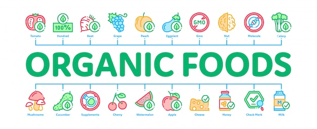 Organic eco foods minimal infographic banner