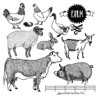 Organic farm Animals set