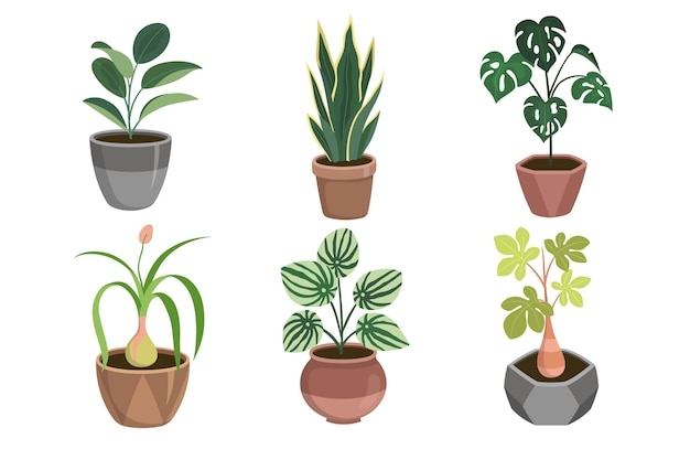 Organic flat design houseplant collection