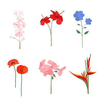 Organic flat flower collection