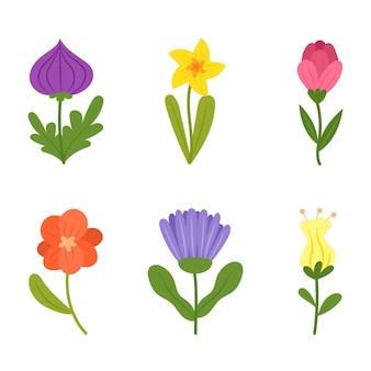 Коллекция органических плоских цветов