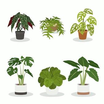 유기 평면 관엽 식물 컬렉션