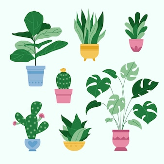 Organic flat houseplant collection
