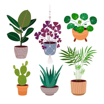 Organic flat houseplant collection