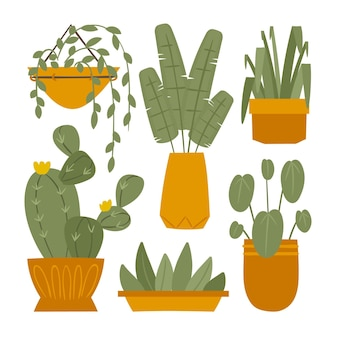 有機フラット観葉植物コレクション