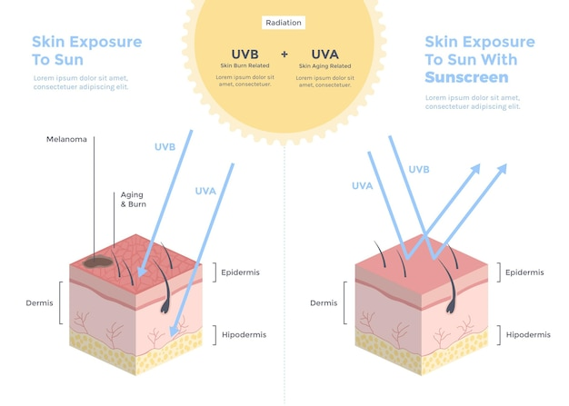 Organic flat sun protection infographic