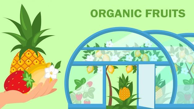 유기농 과일 웹 배너 평면 벡터 템플릿