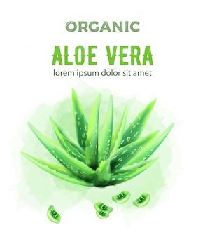 Organic green watercolor aloe vera plant