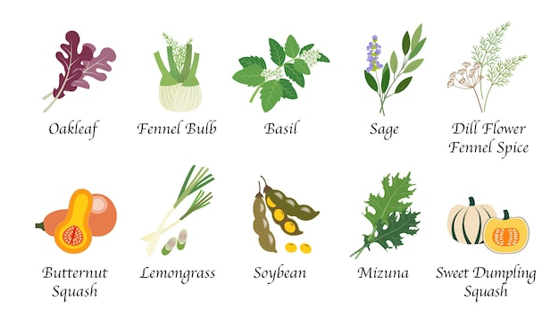 유기농 자연 건강 야채 음식 향신료 절연 컬렉션