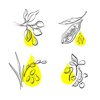 Organic oil set natural bean of soy nut of almond sesame grain rice hand drawn collection