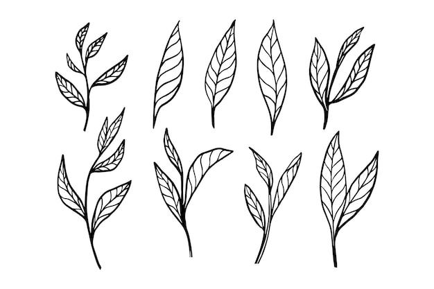 飲み物の組み合わせのベクトルスケッチで有機植物茶葉