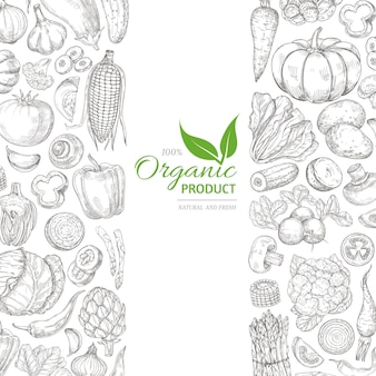 Organic sketch fresh vegetables vector retro with hand drawn doodle greens