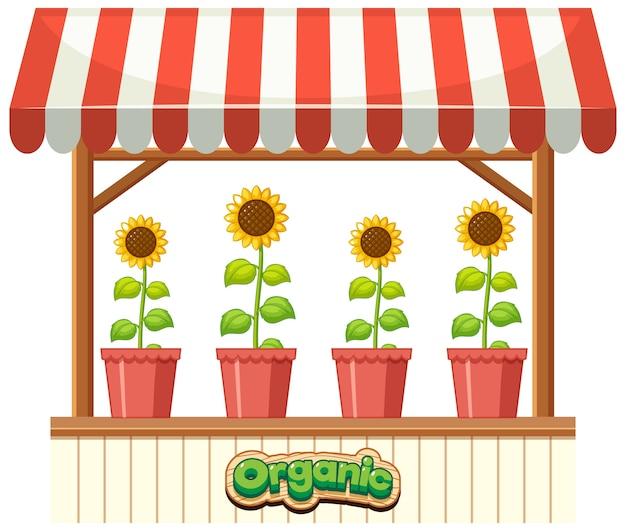 Organic sunflower on the shop