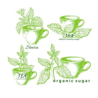 유기농 차 세트. 스테비아 기호. 녹색 지점, 잎, 꽃과 컵. 건강 당뇨병 단잎 음료. 신선한 허브 설탕. 유기농 대안. 손 흰색 배경에 그래픽 그림을 그립니다