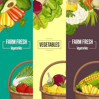 유기농 야채 농업 전단지 세트