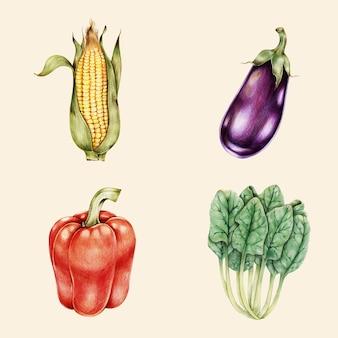 Органические овощи винтаж векторный рисованной коллекции