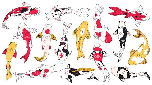 오리엔탈 잉어 물고기