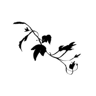 아이비 분기의 화려한 잉크 그림입니다. 문신 디자인 컨셉입니다. 검은 줄기 실루엣 흰색 배경에 고립입니다.