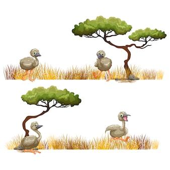 Ostrich designs collection