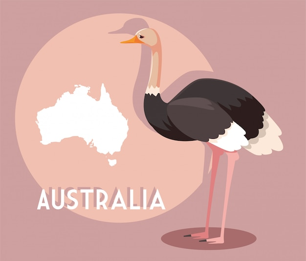 Ostrich with map of australia