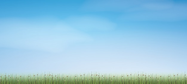 Outdoor background of green field with blue sky.