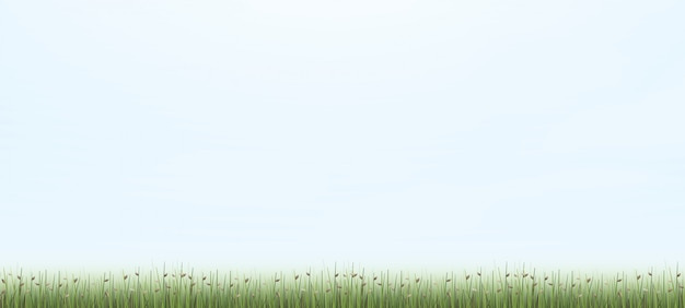 Outdoor background of green field.