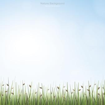 芝生の屋外背景
