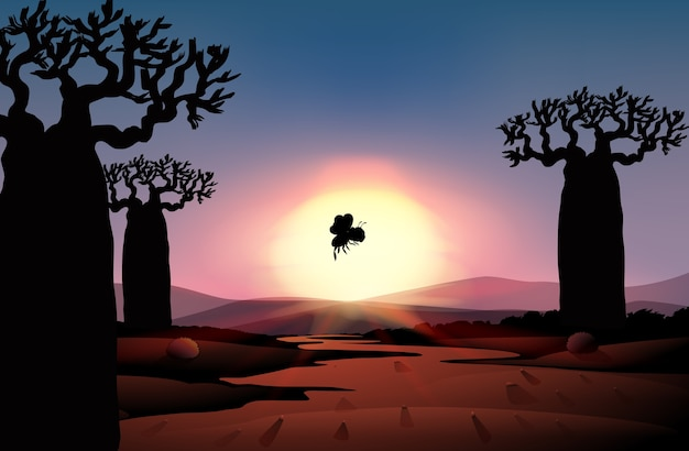 Outdoor nature silhouette sunset scene