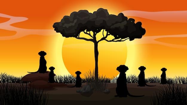 屋外の自然のシルエットの夕日のシーン