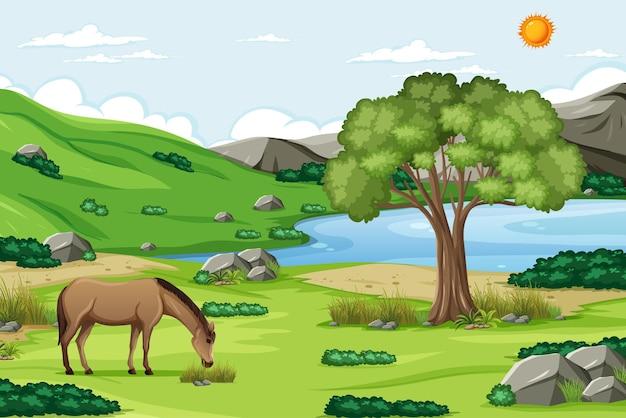 자연 숲과 야외 장면
