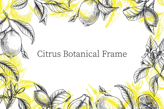 Outline botanical frame with lemons, twigs, flowers and buds