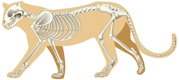 Outline drawing of leopard with skeletons
