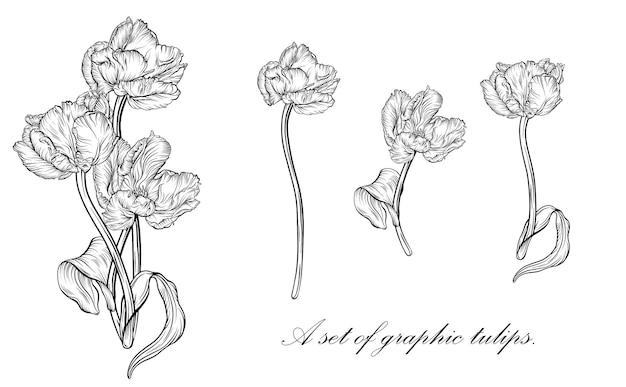 Наброски тюльпан. линии искусства рисованной цветы. вектор тюльпанов. цветочные иллюстрации