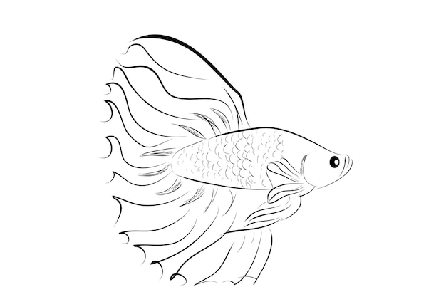 Outline vector betta or siamese fighting fish, big and beautiful tail