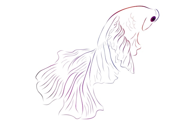 Outline vector betta or siamese fighting fish giant half moon on white background