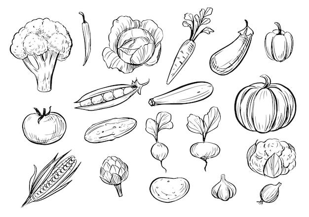 Outline vegetables. doodle illustration.