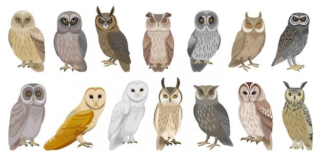 올빼미 새 만화 아이콘의 그림을 설정합니다. . 동물 올빼미의 아이콘을 설정합니다. 흰색 바탕에 새의 고립 된 만화 컬렉션 그림.