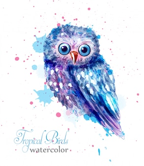 Owl bird colorful watercolor